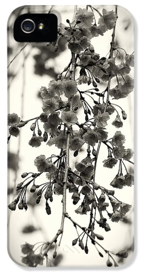 Black And White IPhone 5 / 5s Case featuring the photograph Tiny Buds And Blooms by Angie Tirado