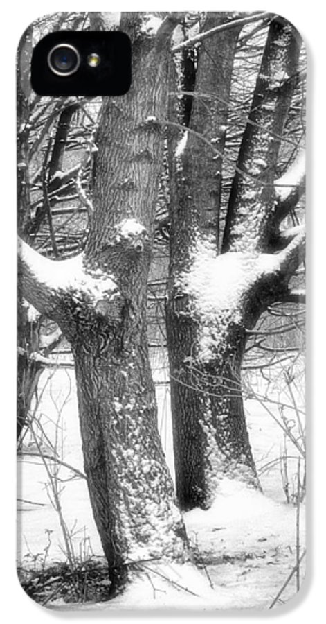 Trees IPhone 5 / 5s Case featuring the photograph Together by Wim Lanclus
