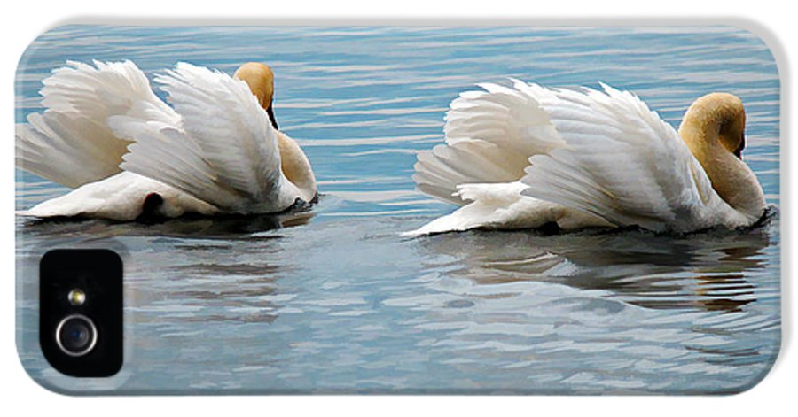 Swans IPhone 5 / 5s Case featuring the photograph True Love by Lois Bryan