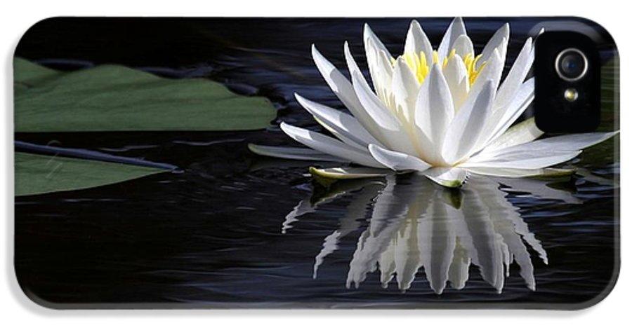 Water Lily IPhone 5 / 5s Case featuring the photograph White Water Lily by Sabrina L Ryan
