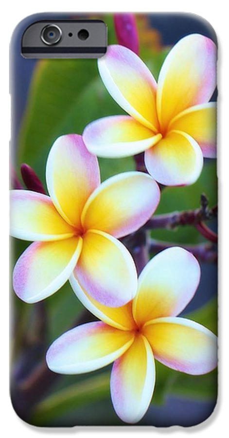 Floral IPhone 6 Case featuring the photograph Backyard Plumeria by Jade Moon