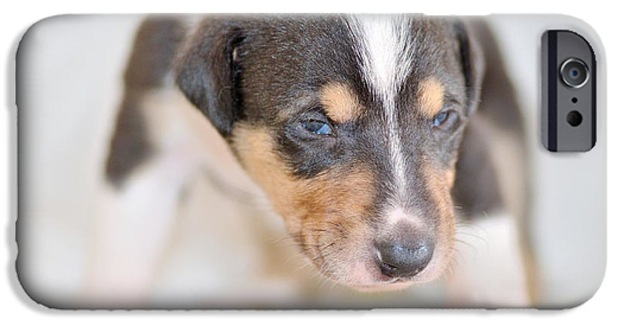 Collie IPhone 6s Case featuring the photograph Cute Smooth Collie Puppy by Martin Capek