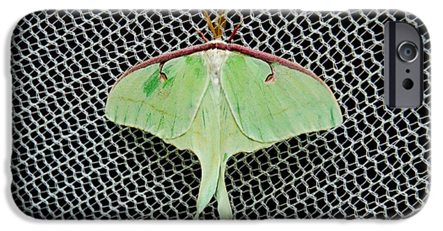 Luna Moth IPhone 6s Case featuring the photograph Mint Green Luna Moth by Andee Design