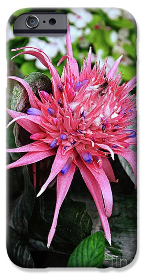 Green IPhone 6s Case featuring the photograph Pink Bromeliad by Andee Design