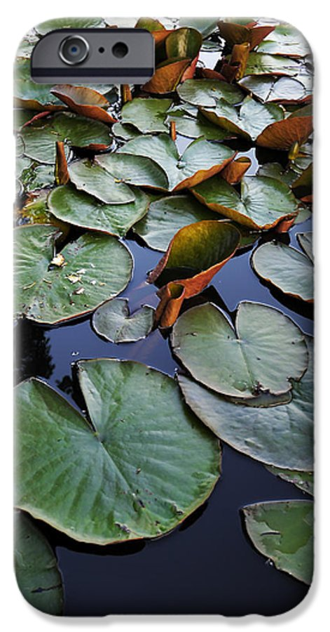 Lake IPhone 6s Case featuring the photograph Lake Plant by Svetlana Sewell
