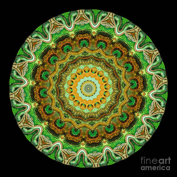 Ernst Haeckel Poster featuring the photograph Kaleidoscope Ernst Haeckl Sea Life Series by Amy Cicconi