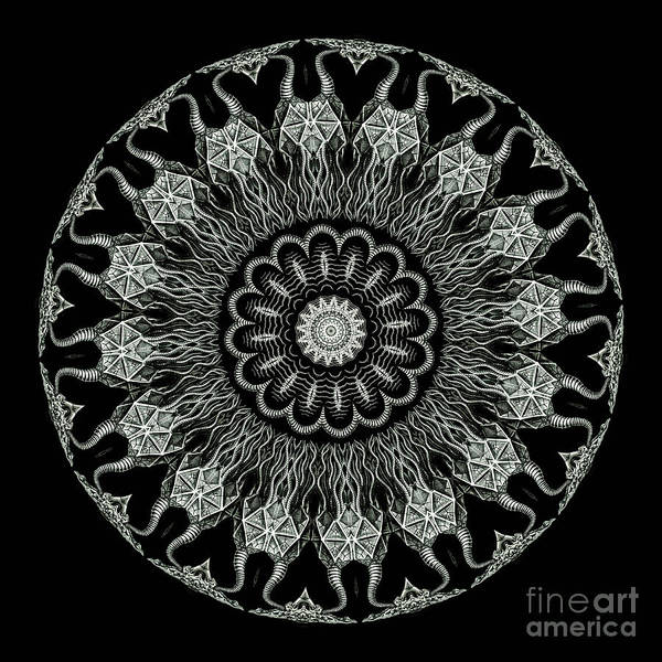 Ernst Haeckel Poster featuring the photograph Kaleidoscope Ernst Haeckl Sea Life Series Black And White Set On by Amy Cicconi