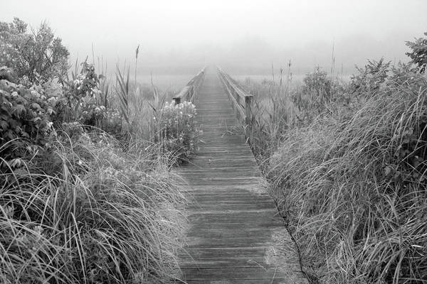 Quogue Wildlife Preserve Poster featuring the photograph Boardwalk In Quogue Wildlife Preserve by Rick Berk