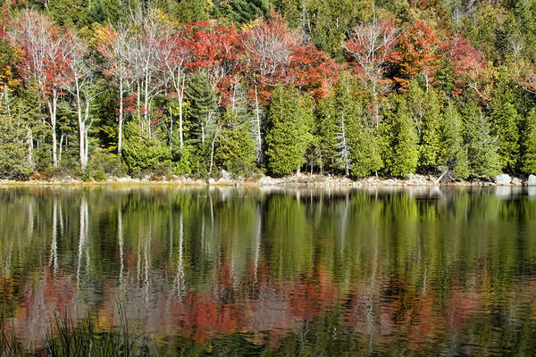 Landscapes Poster featuring the photograph Acadia Tree Reflections by Alexander Mendoza