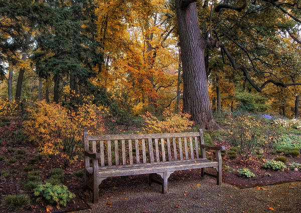 Autumn Poster featuring the photograph A Place To Rest by Jessica Jenney