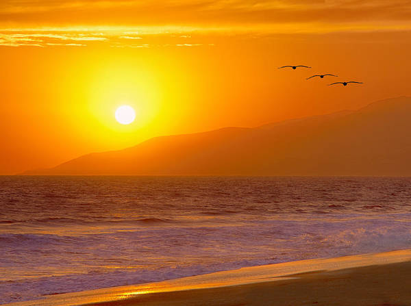 Birds Poster featuring the photograph Flying Into The Sunset by Robert Jensen