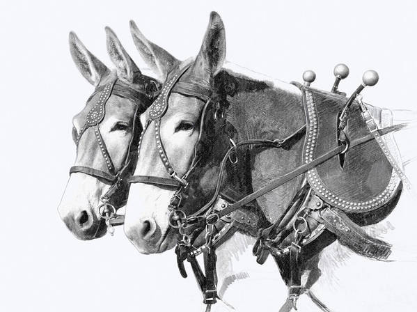 Draft Poster featuring the drawing Sorrel Mule Team by Bethany Caskey