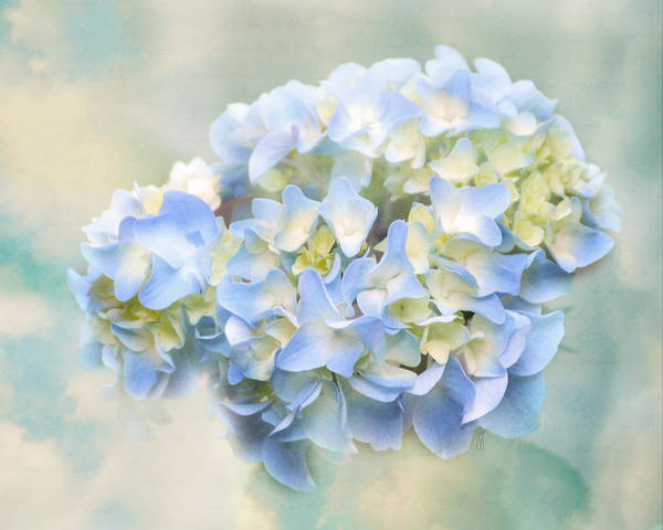 Antique Poster featuring the photograph Love Letter Vii Hydrangea by Jai Johnson