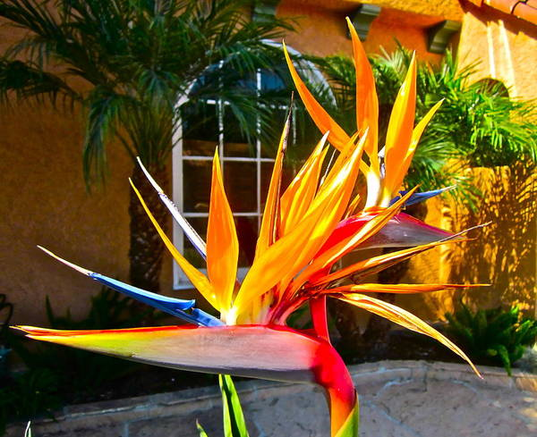 Photograph Of Bird Of Paradise Poster featuring the photograph Birds In Paradise by Gwyn Newcombe