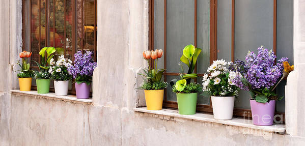 Istanbul Poster featuring the photograph Potted Flowers 02 by Rick Piper Photography