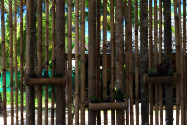Bamboo Poster featuring the photograph Bamboo View by Georgia Fowler