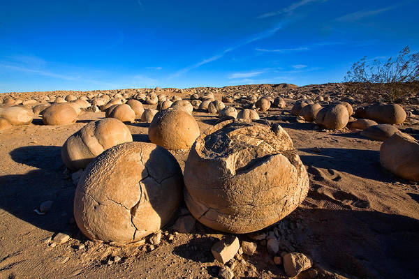 Anza-borrego Desert Poster featuring the photograph The Pumpkin Patch by Peter Tellone