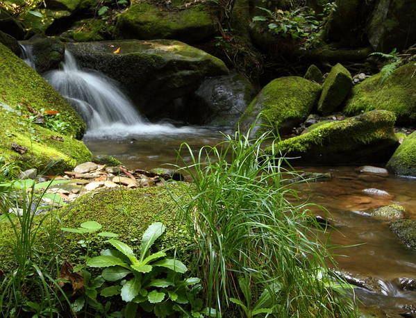 Tennessee Poster featuring the photograph Moss And Water And Ambience by Andrew McInnes