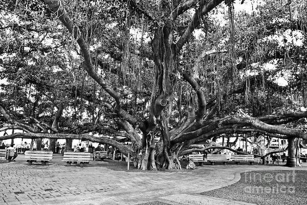 Banyan Tree Poster featuring the photograph Banyan Tree by Scott Pellegrin