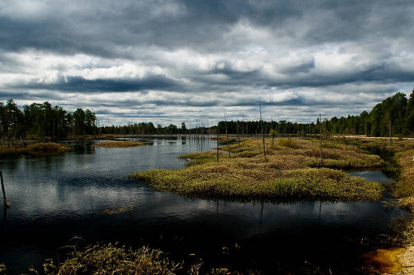 Pine Barrens Poster featuring the photograph Pine Barrens by Louis Dallara
