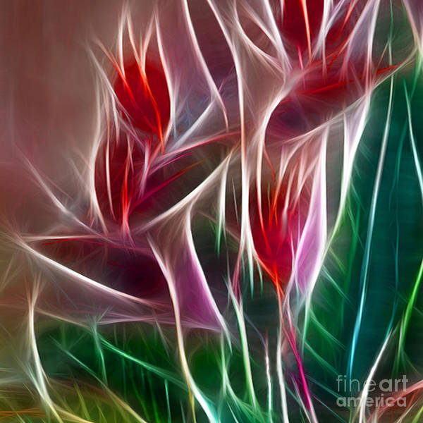 Bird Of Paradise Poster featuring the digital art Bird Of Paradise Fractal Panel 2 by Peter Piatt