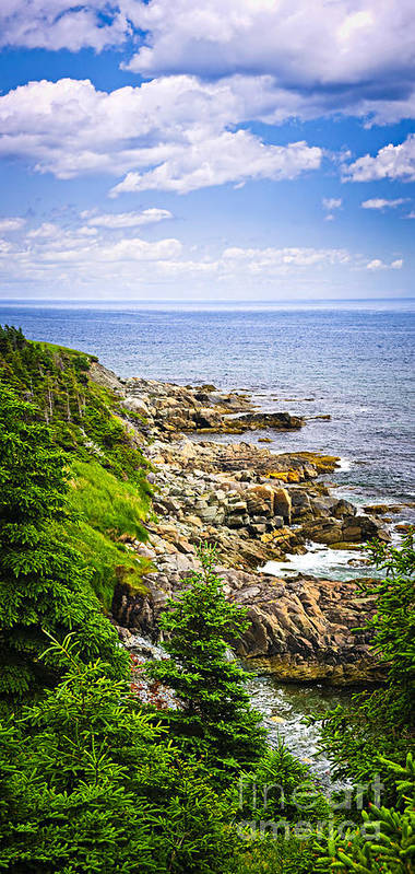 Coast Poster featuring the photograph Atlantic Coast In Newfoundland by Elena Elisseeva