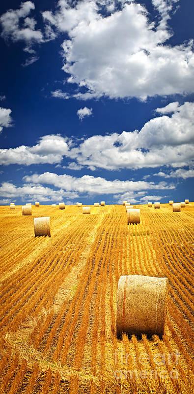 Agriculture Poster featuring the photograph Farm Field With Hay Bales In Saskatchewan by Elena Elisseeva