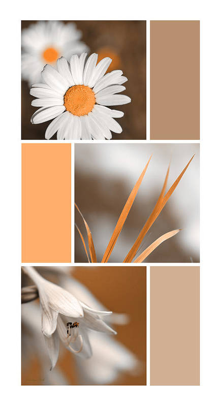 Tangerine Poster featuring the digital art Tangerine Flowers Collage by Christina Rollo