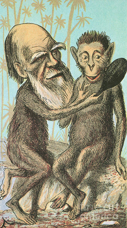 Darwin Poster featuring the photograph Charles Darwin Caricature, 1874 by Science Source