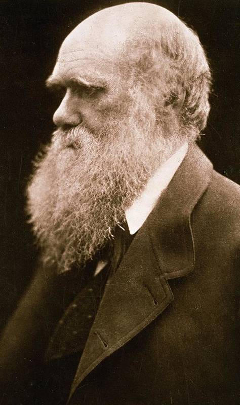 Beard Poster featuring the photograph Charles Darwin by Julia Margaret Cameron