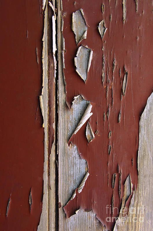 Abstract Poster featuring the photograph Peeling Paint by Carlos Caetano