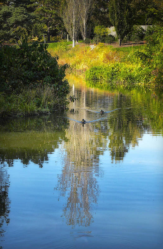 Park Poster featuring the photograph Serene Reflection by Julie Palencia