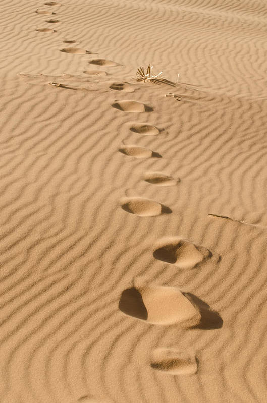 Coral Pink Sand Dunes Poster featuring the photograph Leave Only Footprints by Heather Applegate