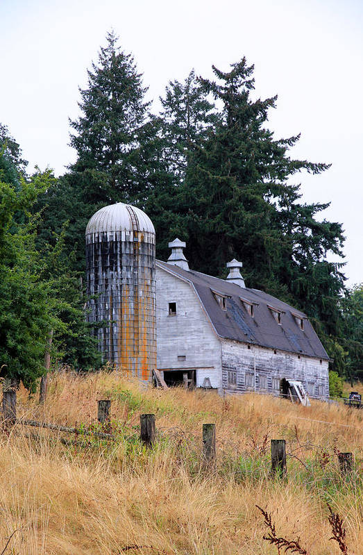 Barn Poster featuring the photograph Old Barn In Field by Athena Mckinzie