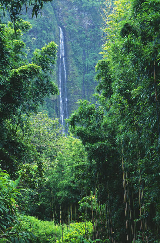 Bamboo Poster featuring the photograph Waimoku Falls by Dave Fleetham - Printscapes