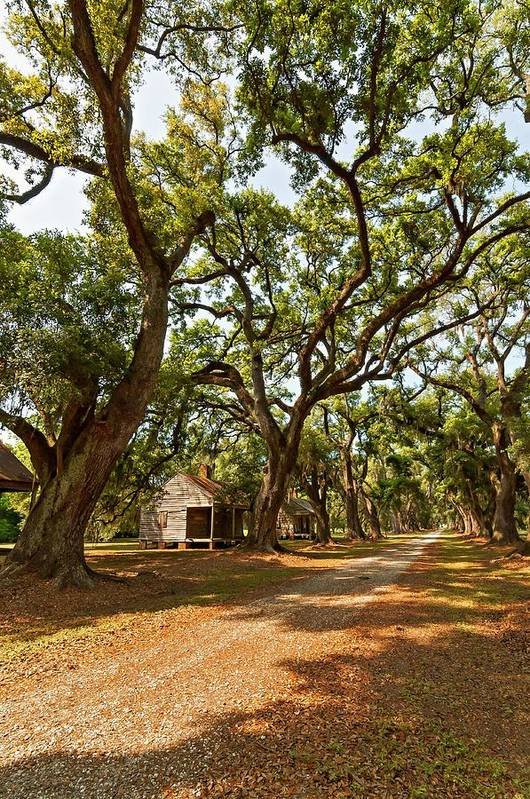 Evergreen Plantation Poster featuring the photograph Southern Lane by Steve Harrington