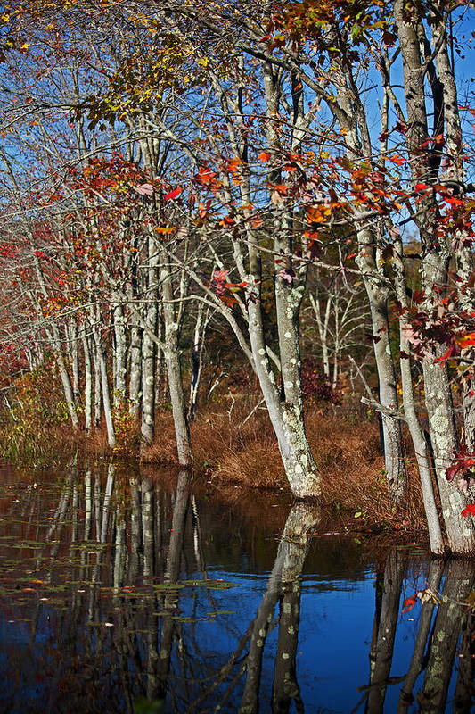 Autumn Poster featuring the photograph Autumn Blue by Karol Livote