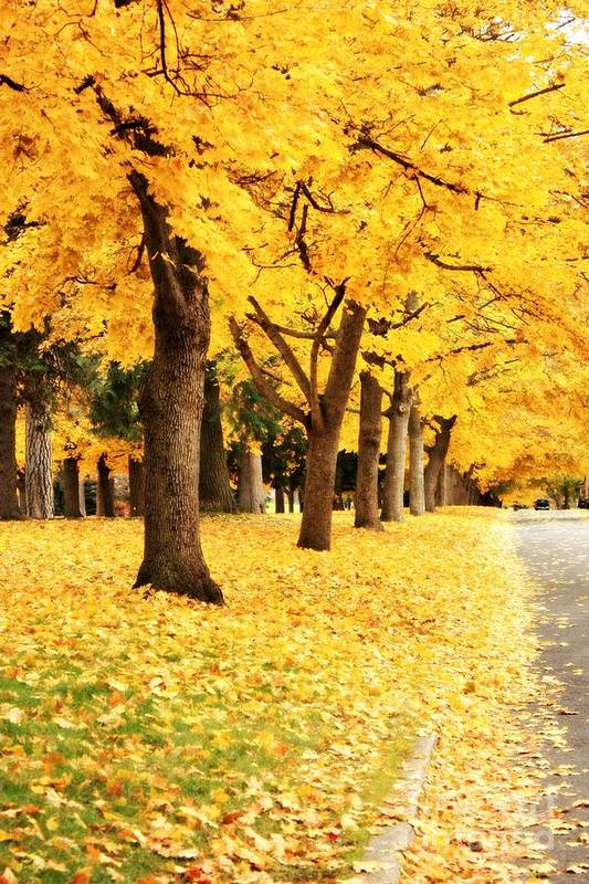 Carol Groenen Poster featuring the photograph Autumn Perspective by Carol Groenen