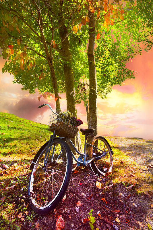 Appalachia Poster featuring the photograph Bicycle Under The Tree by Debra and Dave Vanderlaan