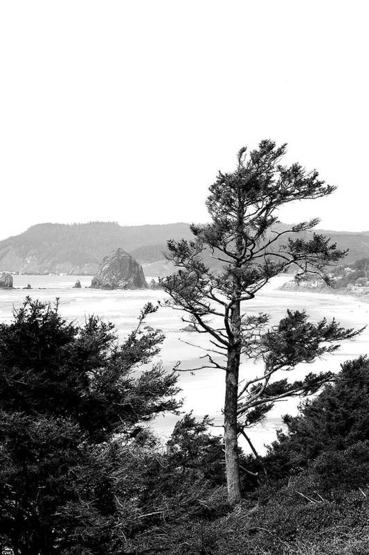 Black And White Poster featuring the photograph Cannon Beach by David Patterson