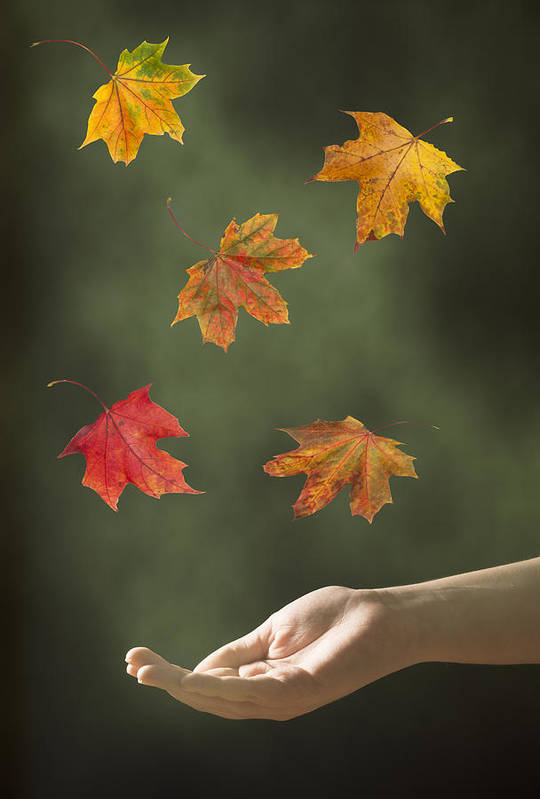 Hand Poster featuring the photograph Catching Leaves by Amanda Elwell