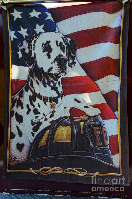 Paul Ward Poster featuring the photograph Dalmatian The Firefighters Mascot by Paul Ward