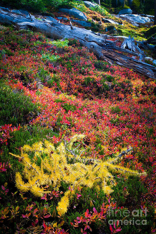 Alpine Lakes Wilderness Poster featuring the photograph Enchanted Colors by Inge Johnsson