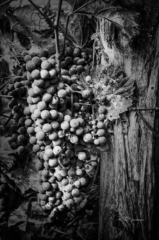 Future Wine Poster featuring the photograph Future Wine by Jeff Swanson