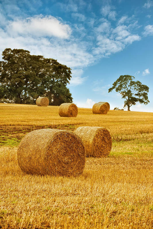 Straw Poster featuring the photograph Hay Bales by Amanda Elwell
