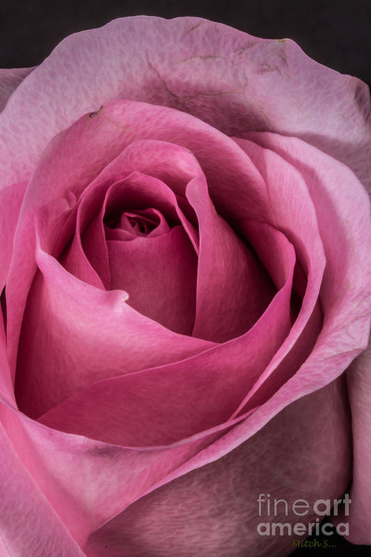 Just A Rose Poster featuring the glass art Just A Rose by Mitch Shindelbower