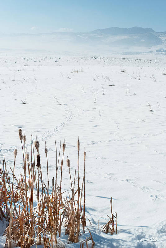 Cattail Poster featuring the photograph Minimalist Cattail Prairie In Colorado by Julie Magers Soulen