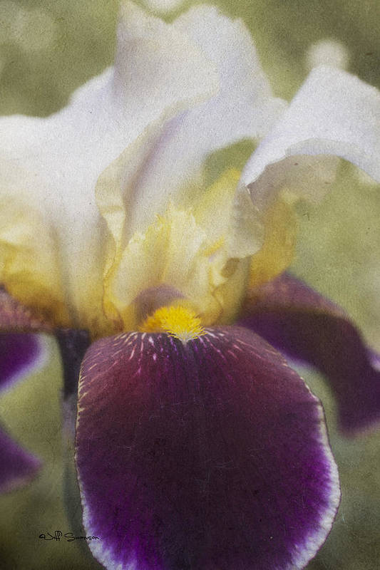 Flower Poster featuring the photograph Purple Iris by Jeff Swanson