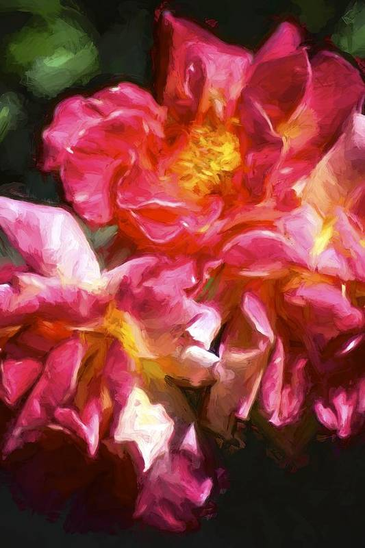 Floral Poster featuring the photograph Rose 115 by Pamela Cooper