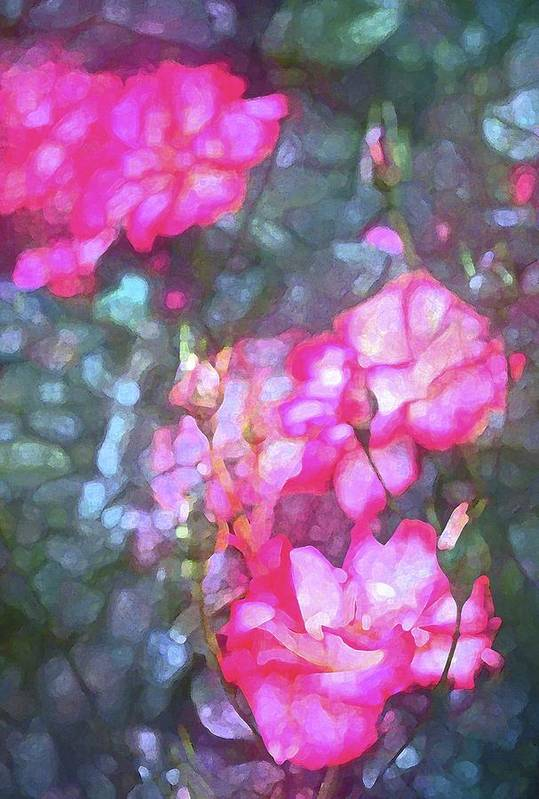 Floral Poster featuring the photograph Rose 188 by Pamela Cooper